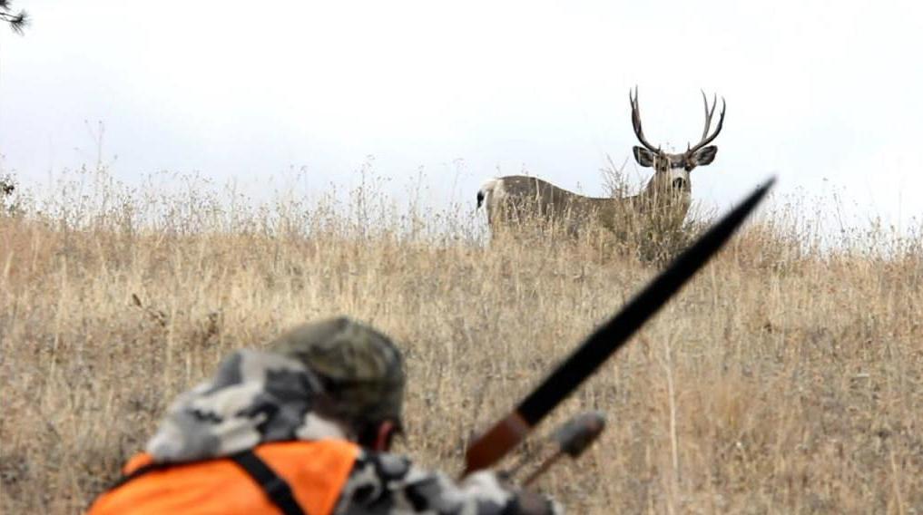 охота на оленя с подхода