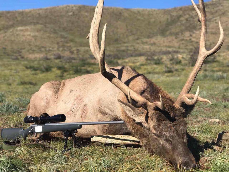 способы охоты на оленя