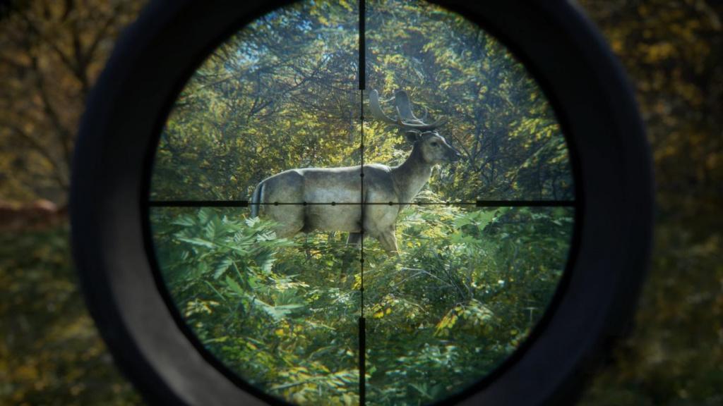 виды оленей