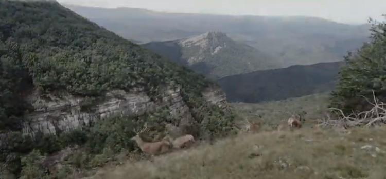 охота на оленя загоном